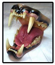 African Lion Jaw And Tongue Set (Large)